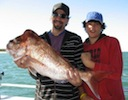 Moreton Island Fishing Charters Knobby Snapper