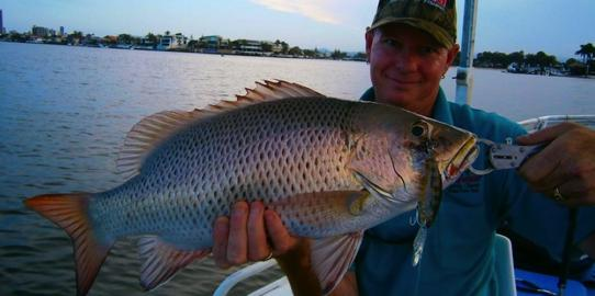 Mangrove Jack caught on Brad Smith Fishing Charters