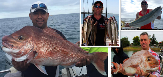 Port Phillip Bay - Snapper, Kingfish or Whiting fishing charters