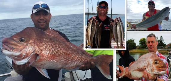 best snapper bait port phillip bay