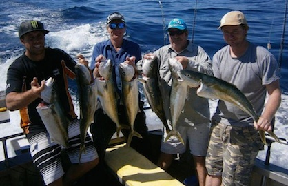 Yellow Tail Kingfish Haul